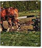 Old Time Horse Plowing Acrylic Print