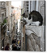 Old Town Alley Cat Acrylic Print