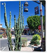 Old Town Cactus Acrylic Print