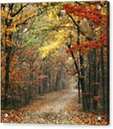 Old Trace Fall - Along The Natchez Trace In Tennessee Acrylic Print by T Lowry Wilson