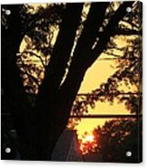 Old Tree And Sunset Acrylic Print