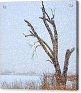 Old Tree In Winter Acrylic Print