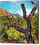 Old Tree Landscape Acrylic Print