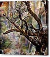 Old Tree Photoart Acrylic Print