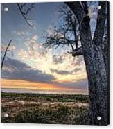 Old Tree Sunset Over Oyster Bay Acrylic Print