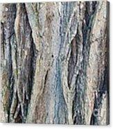 Old Tree Wrinkles Acrylic Print