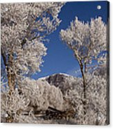 Old Wagon  Horse Frost And Jim Mountain   #3945 Acrylic Print