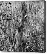 Old Wooden Fence Post In A Field Acrylic Print
