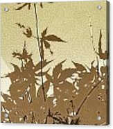Olive And Brown Haiku Acrylic Print