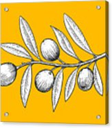 Olive Branch Engraving Style Vector Acrylic Print