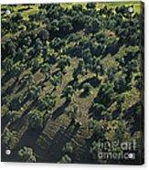 Olive Farmland In Spain Acrylic Print