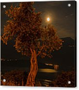 Olive Tree Under Moonlight Acrylic Print