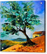 Olive Tree On The Hill Acrylic Print by Elise Palmigiani