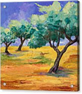 Olive Trees Grove Acrylic Print