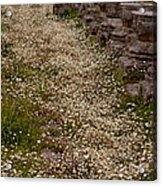 Olympia Ruins And Wild Flowers   #9679 Acrylic Print