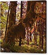 Olympic National Park - Rainforest Acrylic Print