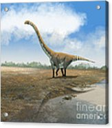 Omeisaurus Tianfuensis, An Euhelopus Acrylic Print by Roman Garcia Mora