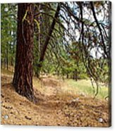 On A Trail From The Past To The Future Acrylic Print