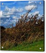 On Beachy Head Plants Bow To The Wind Acrylic Print by John Magnet Bell