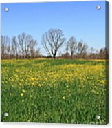 On Golden Field Acrylic Print