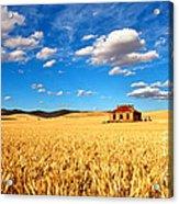 On Golden Fields Acrylic Print