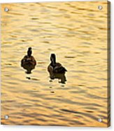 On Golden Pond Ducks Acrylic Print