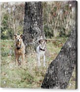 On Guard - Featured In Comfortable Art Group Acrylic Print