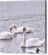 On Lake Acrylic Print