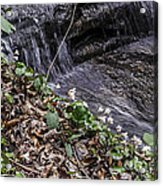 On The Banks Of The Rapids Acrylic Print