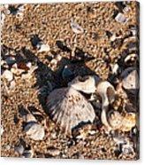 On The Beach 03 Acrylic Print