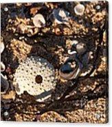 On The Beach 05 Acrylic Print