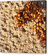 On The Beach 07 Acrylic Print
