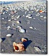 On The Beach Apple Murex Acrylic Print