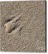 Shell On The Beach Acrylic Print