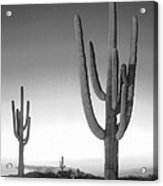 On The Border Acrylic Print by Mike McGlothlen