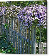 On The Fence Acrylic Print