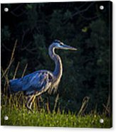 On The March Acrylic Print