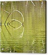 On The Pond Acrylic Print