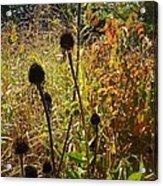 On The Prairie #4 Acrylic Print
