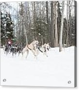 On The Race Trail Acrylic Print by Tim Grams