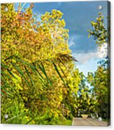 On The Road To Autumn Acrylic Print