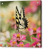 On The Top - Swallowtail Butterfly Acrylic Print