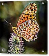 On The Wings Of A Butterfly... Acrylic Print