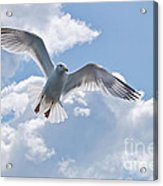 On The Wings Of A Gull Acrylic Print