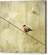 On The Wire Acrylic Print