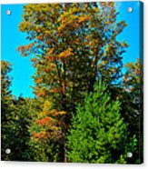 On Top Of Maple Ridge - Old Forge New York Acrylic Print by David Patterson