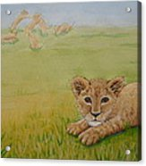 Once There Was A Lion Named Leo Acrylic Print