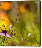 Once Upon A Time There Lived A Flower Acrylic Print