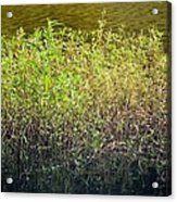 Once Upon An Egret's Home Acrylic Print