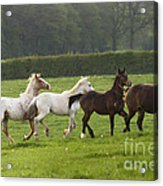 One After One Acrylic Print